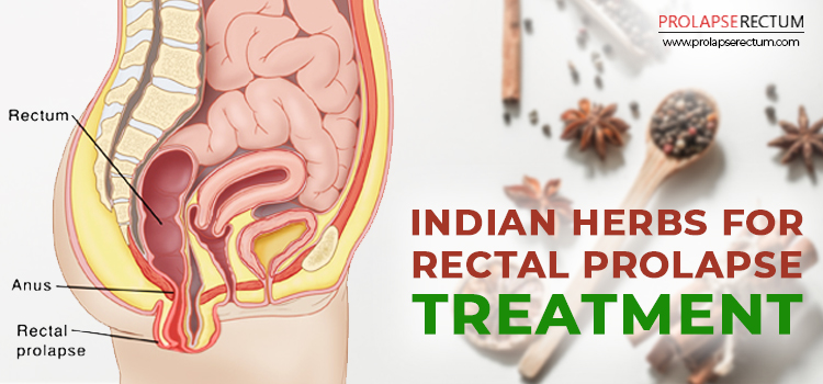 Indian Herbs for Rectal Prolapse Treatment